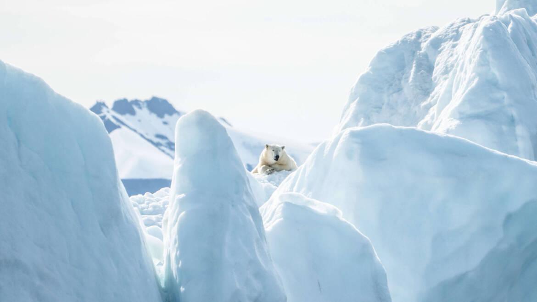 Polarna promocja dla małych misiów