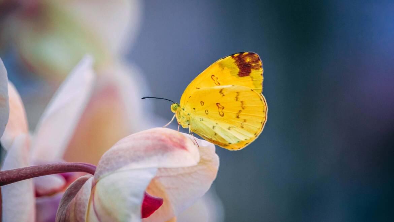 Motylek i wiosenne spacery