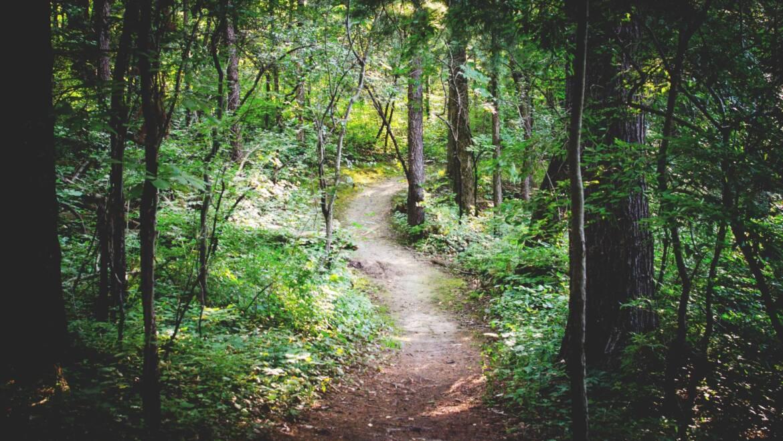Miętowy las w prawdziwym lesie