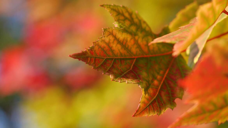 Komfortowa jesień dla maluszka